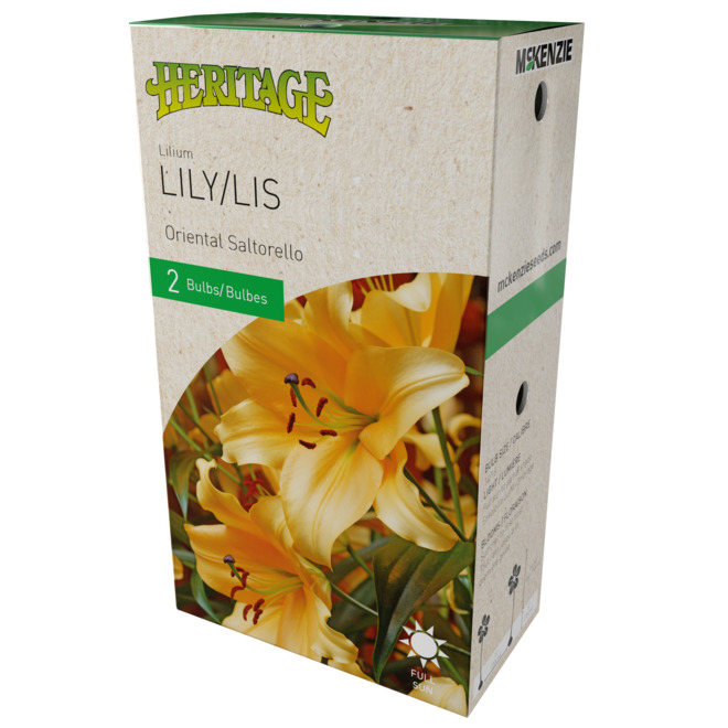 McKensie Lilium Saltorello - 2 Bulbs - 14-16 cm - Yellow