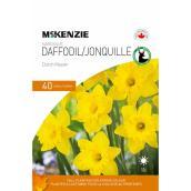 Bulbes de jonquilles McKenzie, Dutch Master, 12-14 cm, paquet de 40