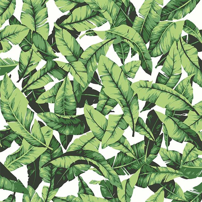 """Papier peint feuilles de palmier, vert, 20,5"""" x 16,5'"""