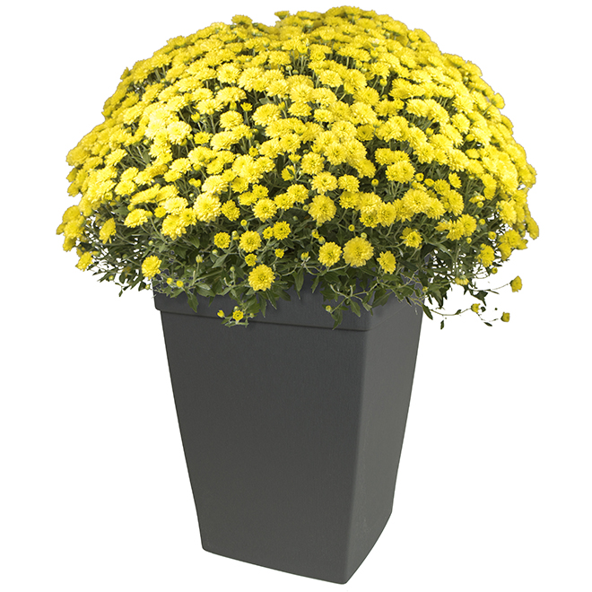 DCN Harmony Tall Planter - Plastic - 12-in - Slate