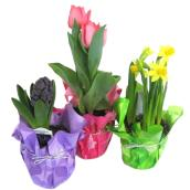 "Flowering Plant Bulb - 4"" - Assorted"