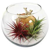 """Jardin tillandsia, boule de verre de 5"""""""