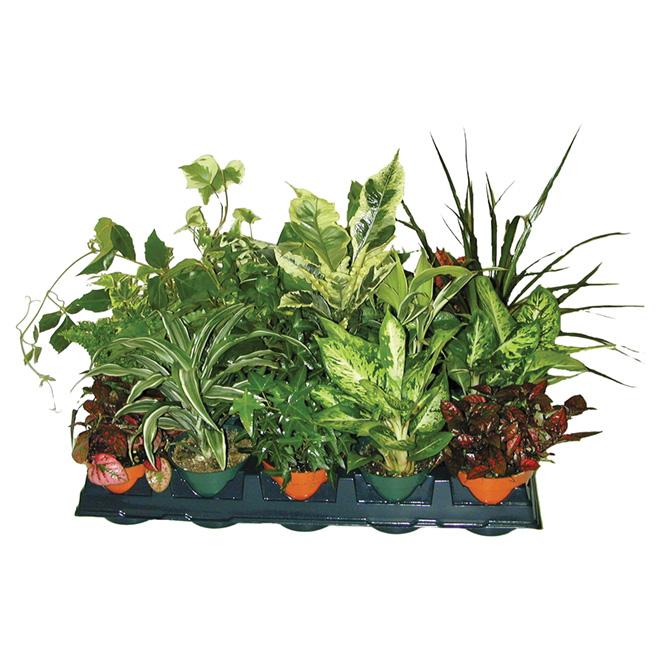 """Plante tropicale assortie, pot de 4"""""""