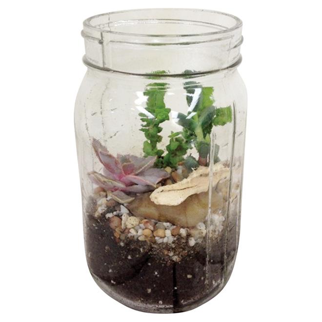 "Succulent Terrarium - 5"" Glass Pot"
