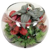 """Terrarium avec succulentes, 6"""", verre"""