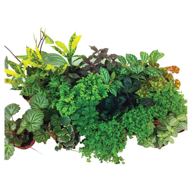 "Assorted Tropical Plant - 2 1/2"" Pot"