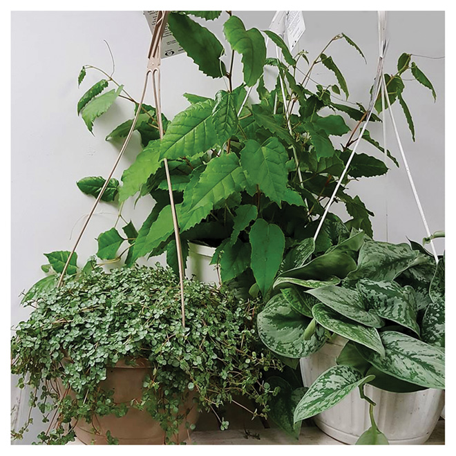 "Assorted Tropical Plant - 10"" Hanging Basket"