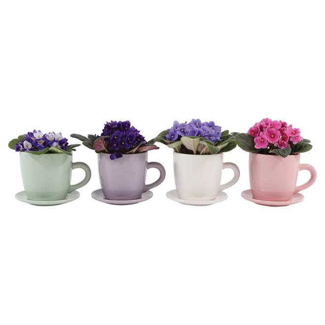 "Jardin en tasse, 2,5"""