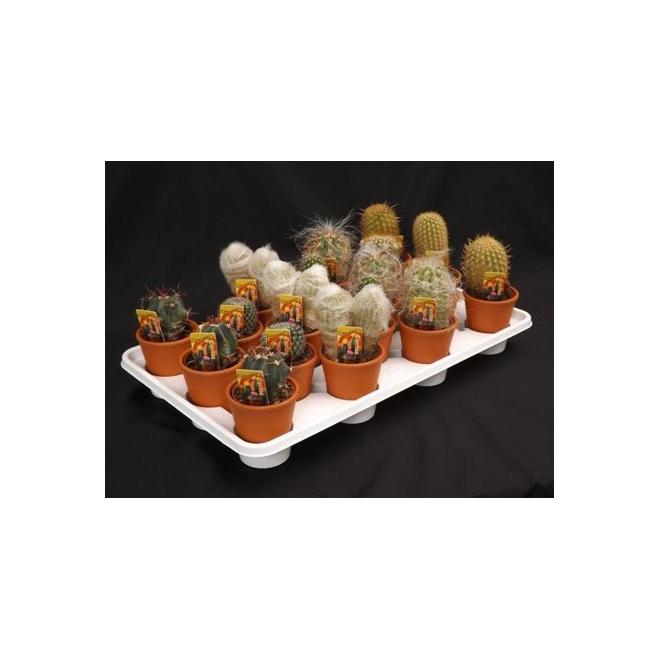 Cactus - Clay Pot - 3 In - Assorted