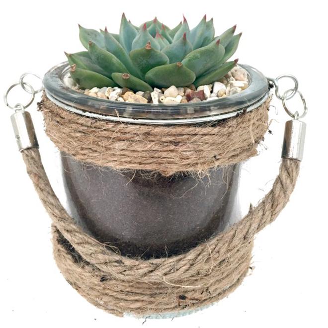 Succulent in Glass Pot - 4 In - Assorted