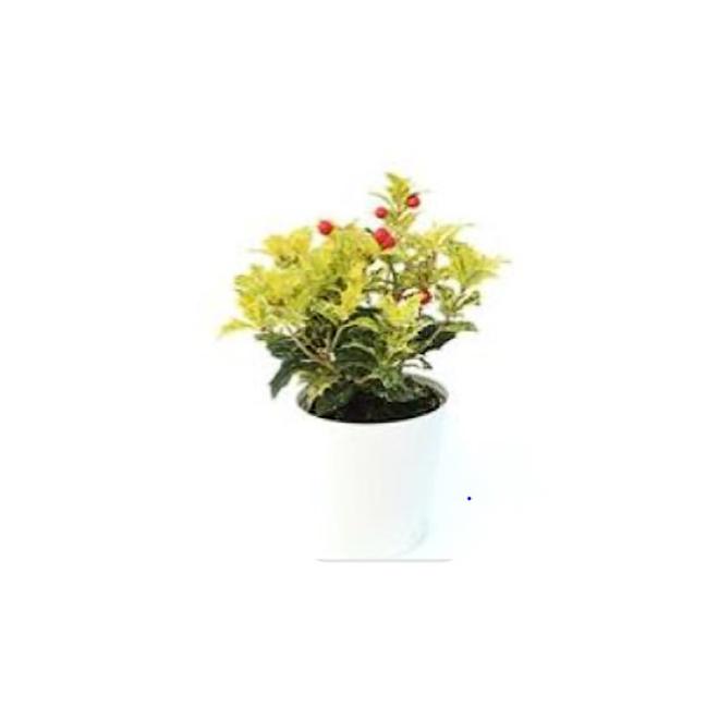 Houx Entreprises Marsolais, pot décoratif de 4 po