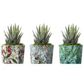 Haworthia assorti, succulente, pot en céramique décoratif