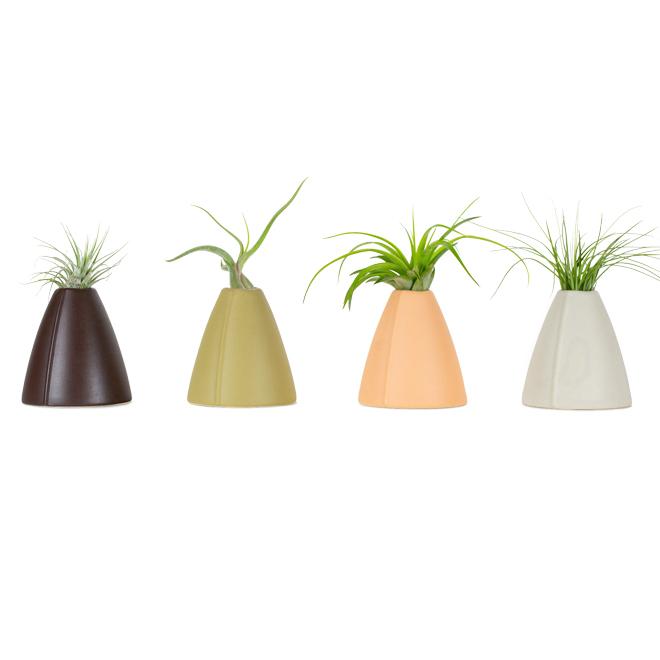 Tillandsia (fille de l'air), vase décorative