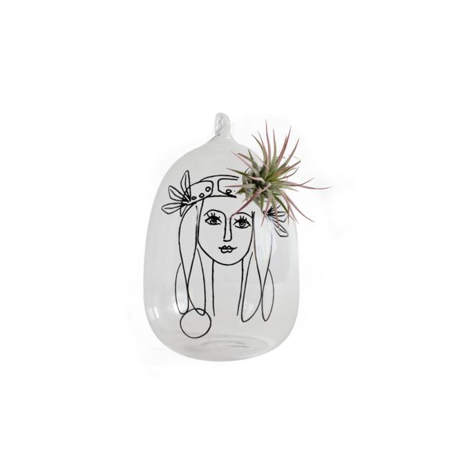 Tillandsia in glass pot