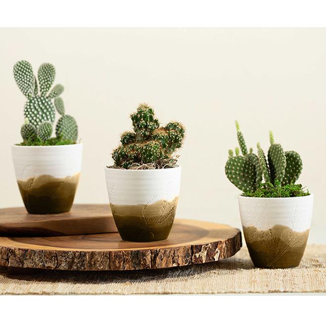 Entreprises Marsolais Assorted Succulent Plants - Imprint Collection Decorative Pot