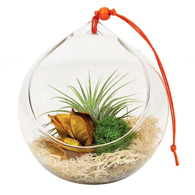 Entreprises Marsolais Tillandsia Snuggery Terrarium - Glass Ball