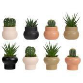 Plantes succulentes assorties Les Entreprises Marsolais, pot décoratif Spice Mark I