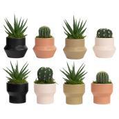 Plantes succulentes assorties Les Entreprises Marsolais, pot décoratif Spice Mark II