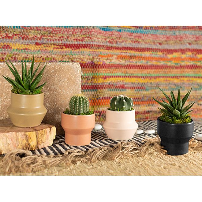 Entreprises Marsolais Assorted Succulents - Spice Mark II Decorative Pot