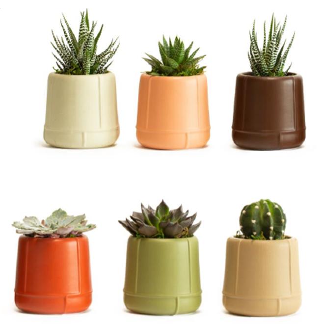 Entreprises Marsolais Assorted Succulents - Morocco Decorative Pot