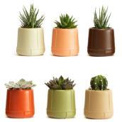 Plantes succulentes assorties Les Entreprises Marsolais, pot décoratif Morocco