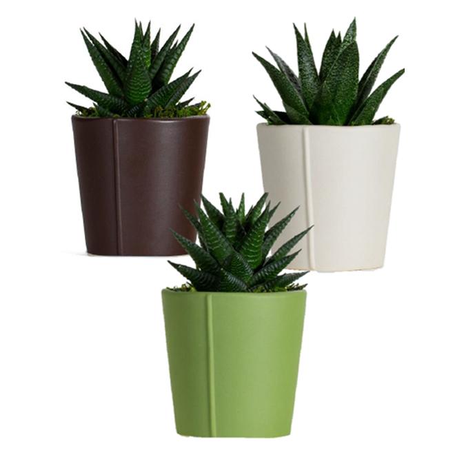 Entreprises Marsolais Assorted Succulents - Decorative Pot