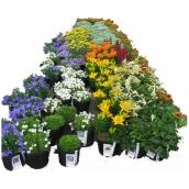 Assorted Perennial - 1-Gallon Container