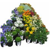 Perennial - Assorted - 2-Gallon Containers