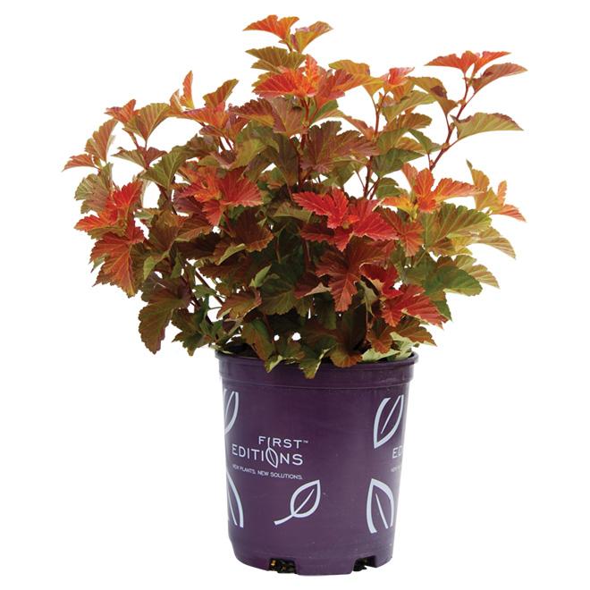 Arbustes assortis, Première Édition, pot de 2 gal