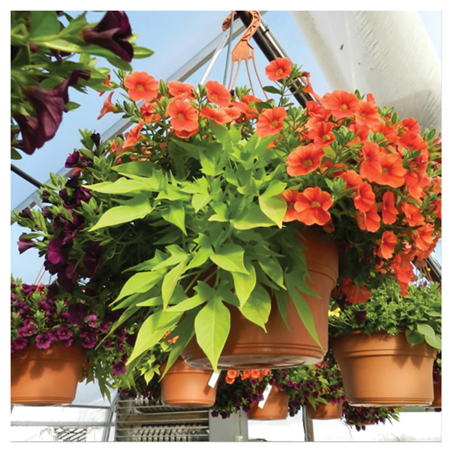 Annuals - Hanging Basket - 12""