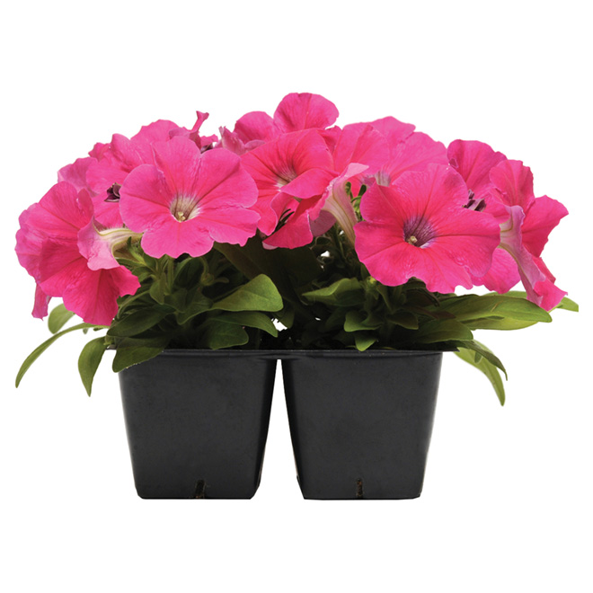 Annuals - Flowers and Vegetables - Potted