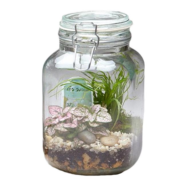 """Terrarium en pot de verre, 8"""""""