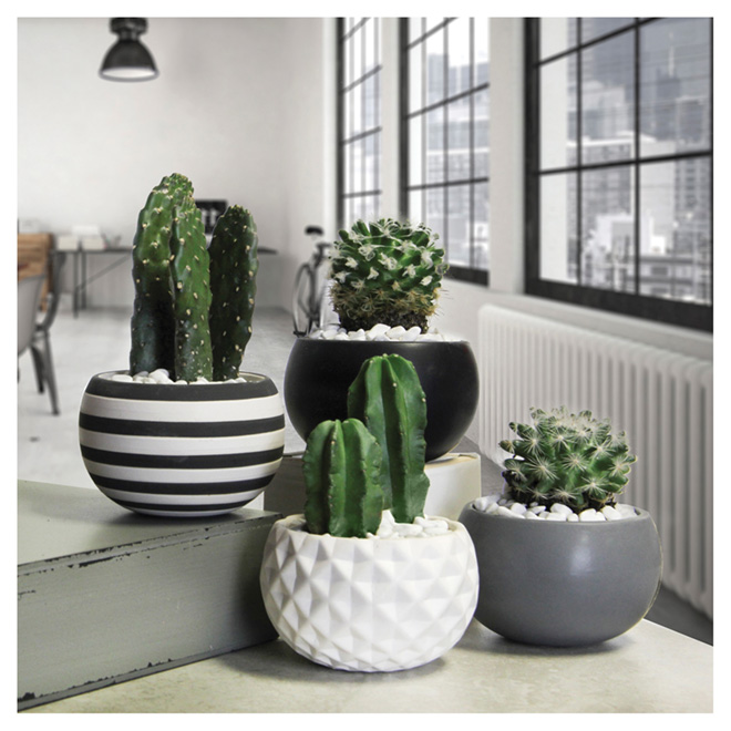 Plante succulente assortie, pot moderne urbain, 5 po