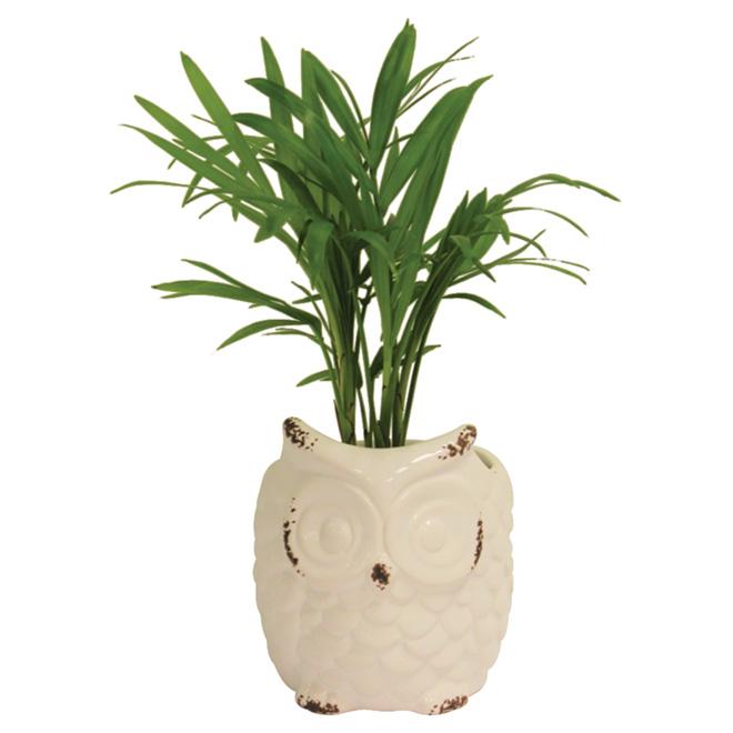 """Plante tropicale en pot décoratif de hibou, 2"""""""