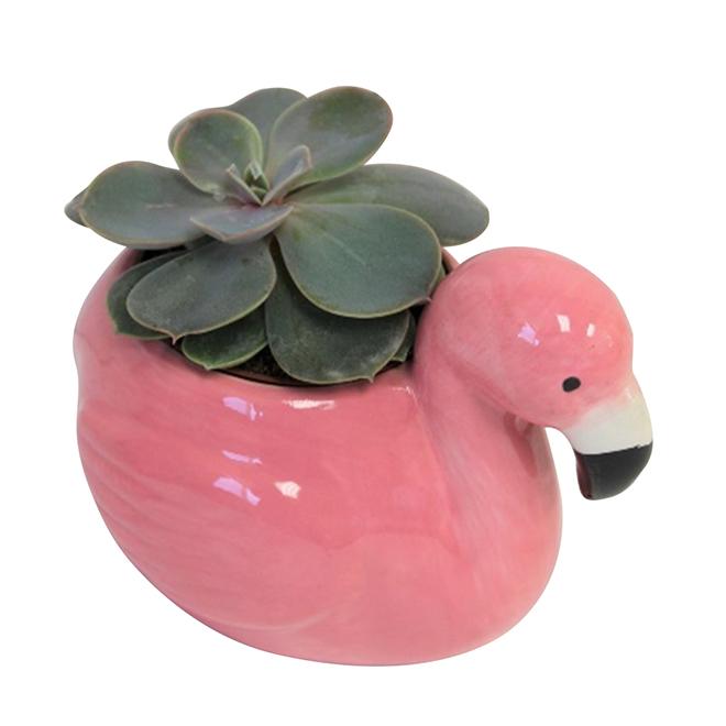 Morgan Creek Tropicals Assorted Succulents - Pink Flamingo Pot