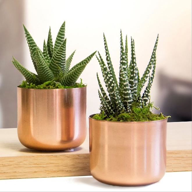Assorted Succulents - Modern Mini Copper Pot - 4.75-in