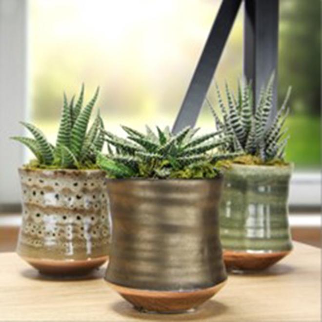 Plante succulente assortie, Modern Tribu Céramique, 3,5 po x 5,5 po