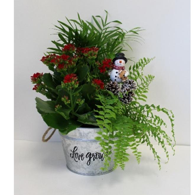 Jardin de Noël, Morgan Creek Tropicals, pot décoratif de 6 po
