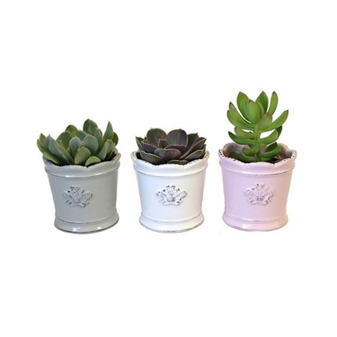 "Assorted Succulent Plants - Victorian - 2"""