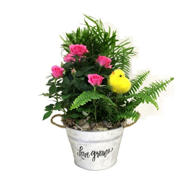 Morgan Creek Tropicals - Easter Garden - Tin Pot - 6''