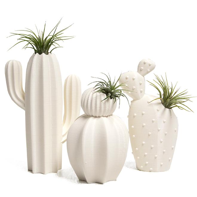 Tillandsias en pot de céramique, modèle cactus, assortiment