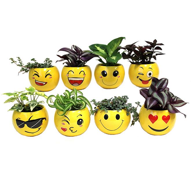 """Plantes tropicales assorties, pot émoji, 2"""""""