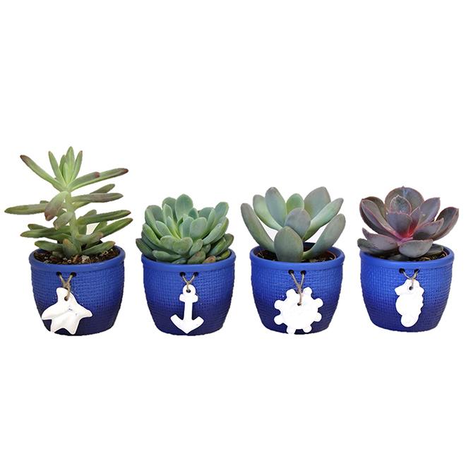 Assorted Succulent Plants - Ceramic Pot - Summer Aquatic