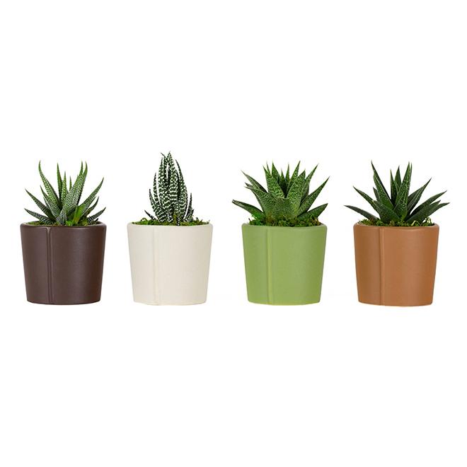 Assorted Succulents - Studio Pots