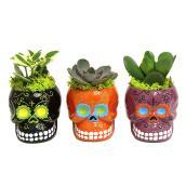 Assorted Succulent - Mini Ceramic Skull Vase