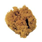 6-in Natural Sea Sponge