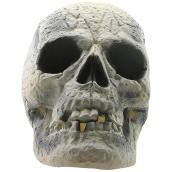 Holiday Living Skull - Brushed - 12-in - Grey
