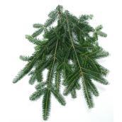 Natural Fraser Fir Branches - 2 lb - Green