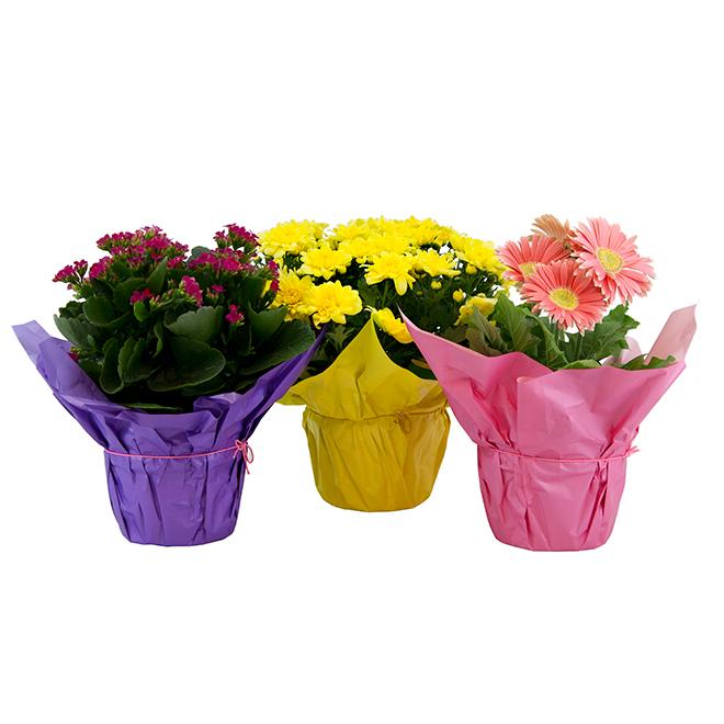 """Plante à fleurs mixtes, 6"""" x 6"""" x 14"""", couleurs assorties"""
