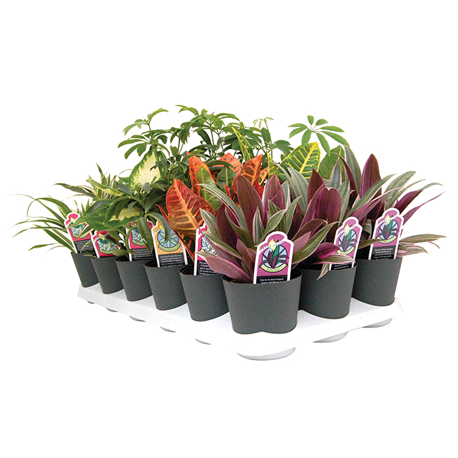 Tropical Plant - 4 In - Green - Assorted